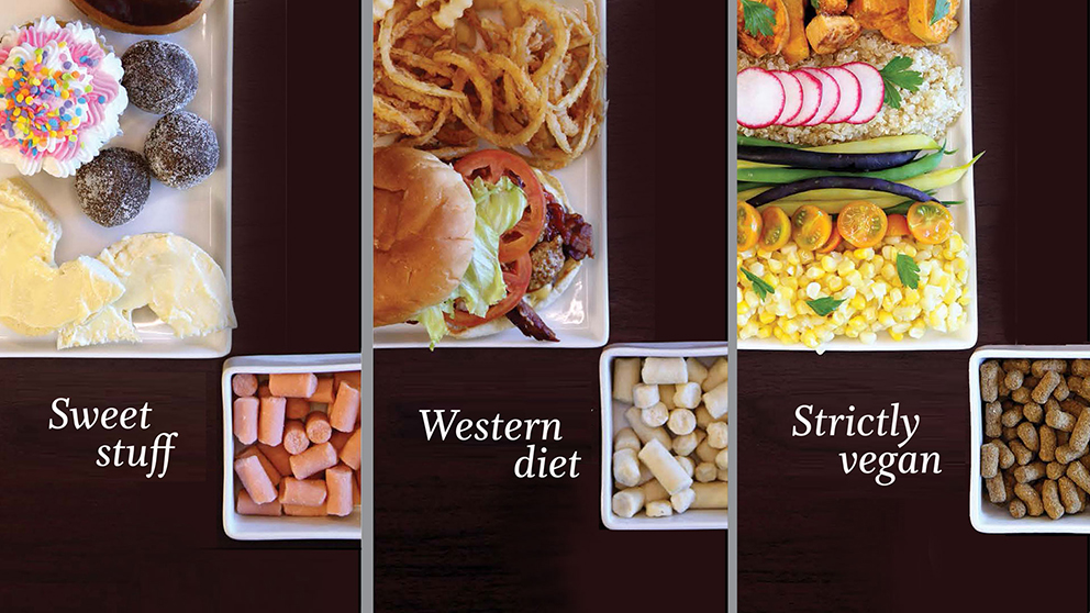 What is the Western Diet?
