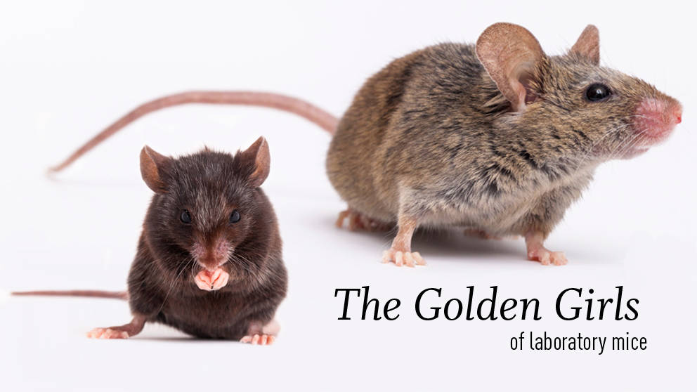 The Golden Girls of laboratory mice—are these the oldest