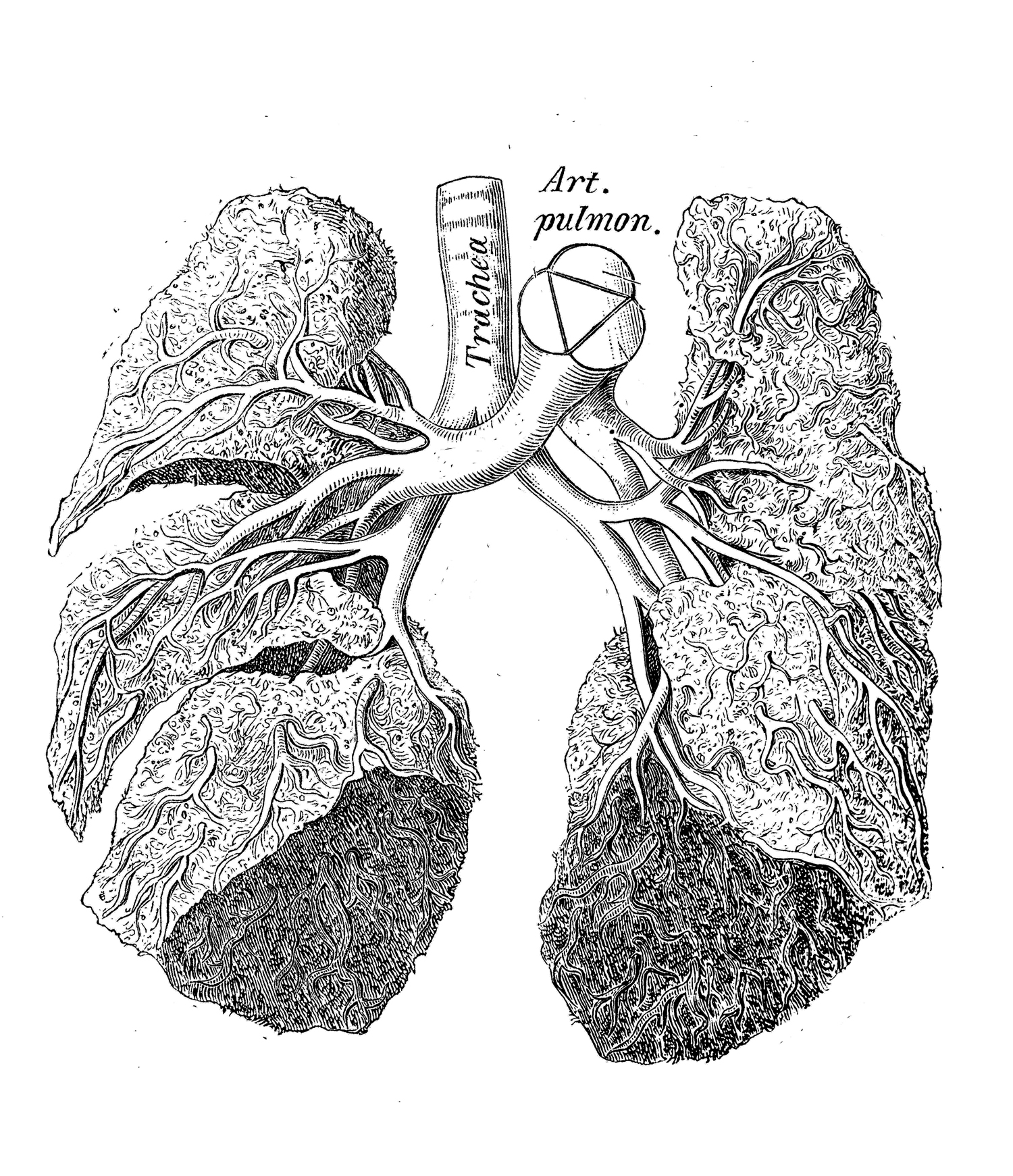 Sep 22 Workshop On Phenotyping Mouse Models Of Human Lung