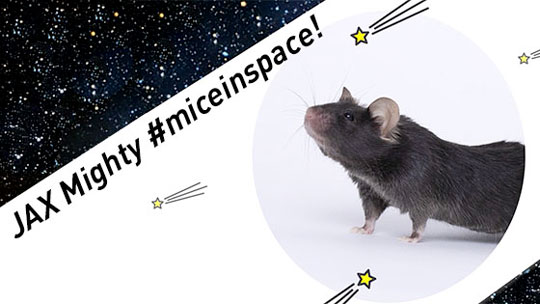 Might Mice in Space