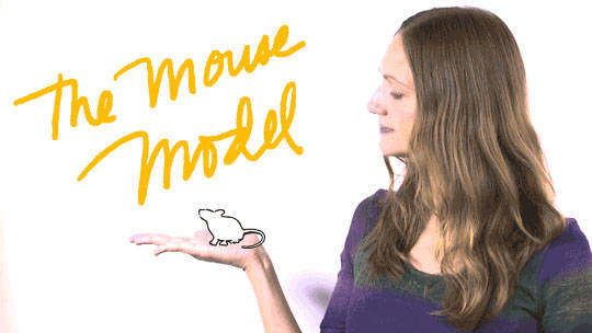 January what is a mouse model