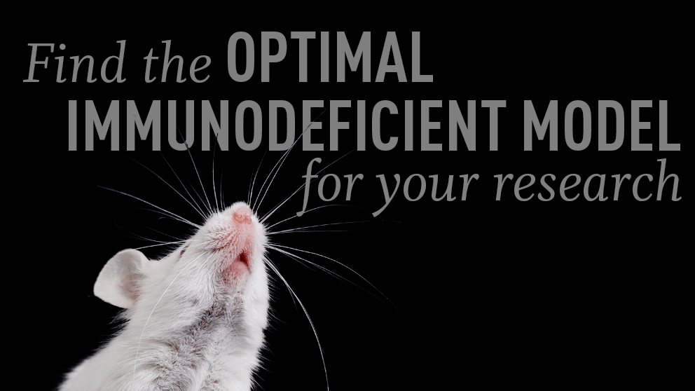 May top tips selecting the best immunodeficient mouse model for your research