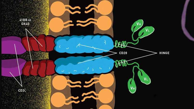 CAR T cells mouse models