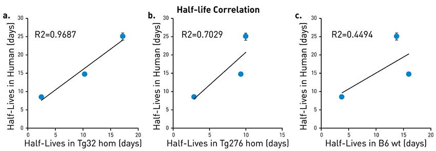 antibody half-life
