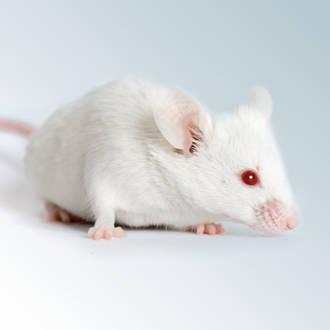 find order mice