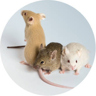 multi mouse group 2