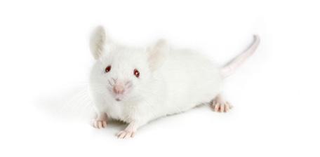 Micro Rna Inhibits Prostate Cancer