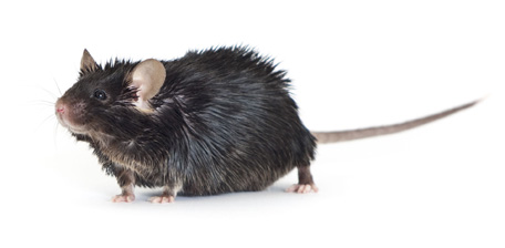 7 Tips Every Dio Mice User Should Know