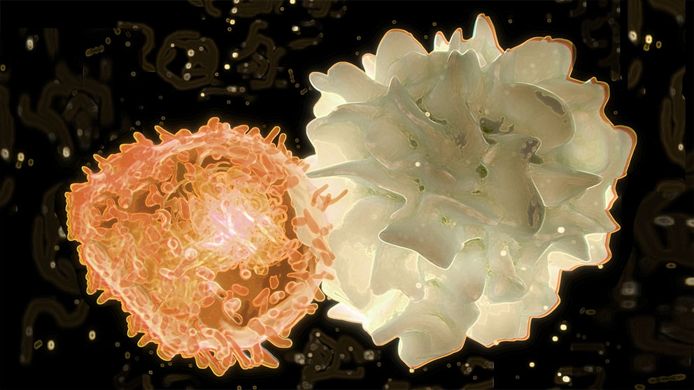 Dendritic cell and T cell