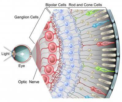 New retinal ganglion cell subtypes emerge from single-cell RNA sequencing