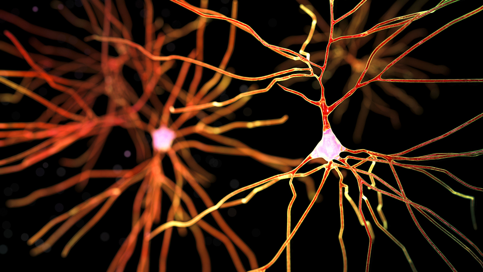 December 600 trillion synapses and alzheimers disease