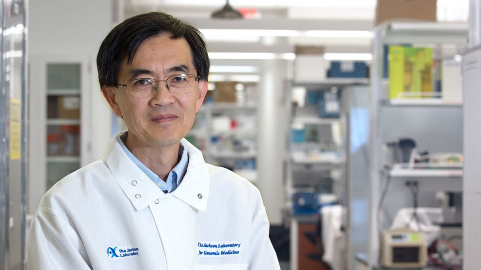 Pioneering scientist Se-Jin Lee, a leader in the study of muscle development, moves his groundbreaking research program to JAX