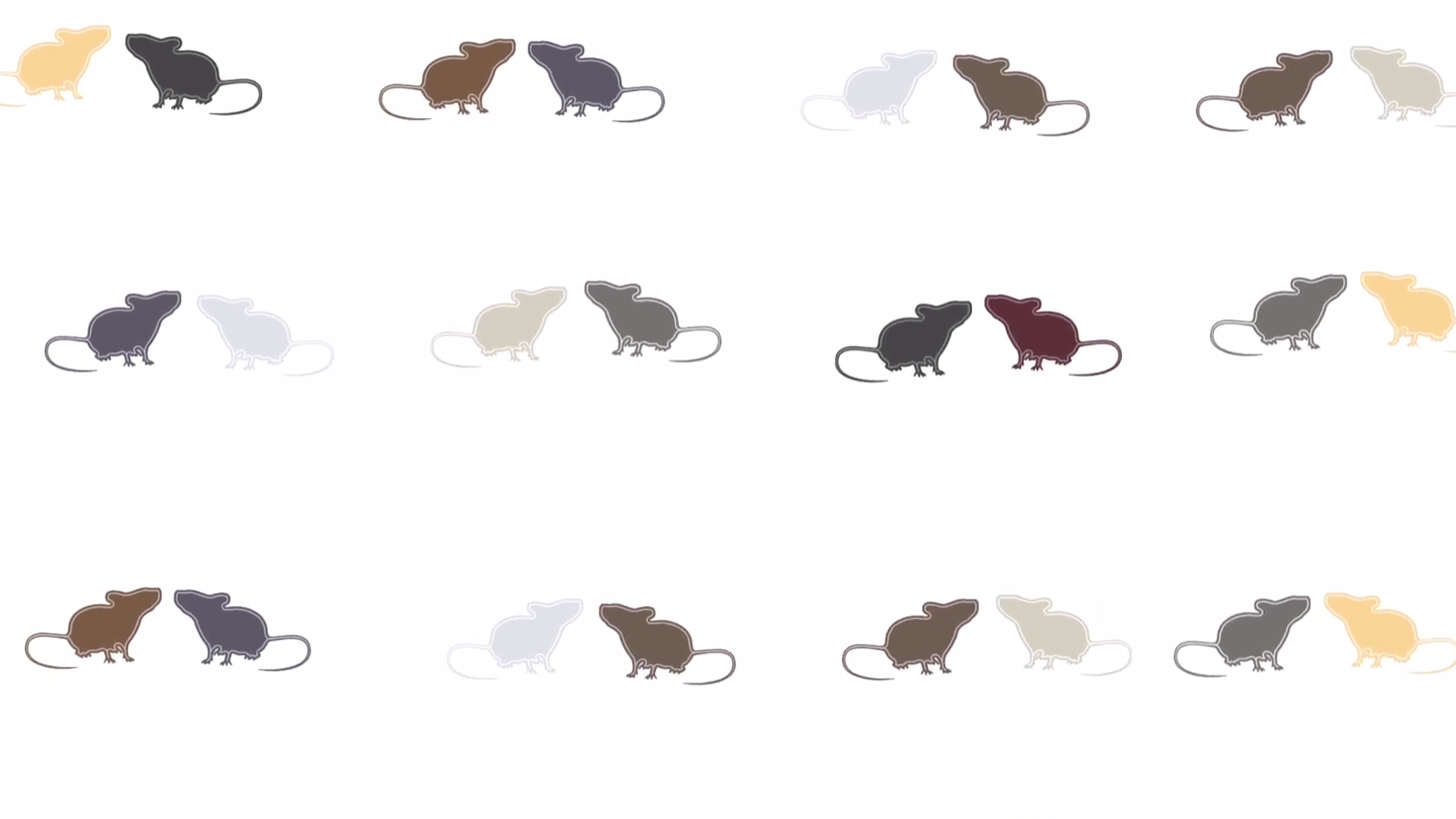 April the how and why of research with diversity mouse strains and populations