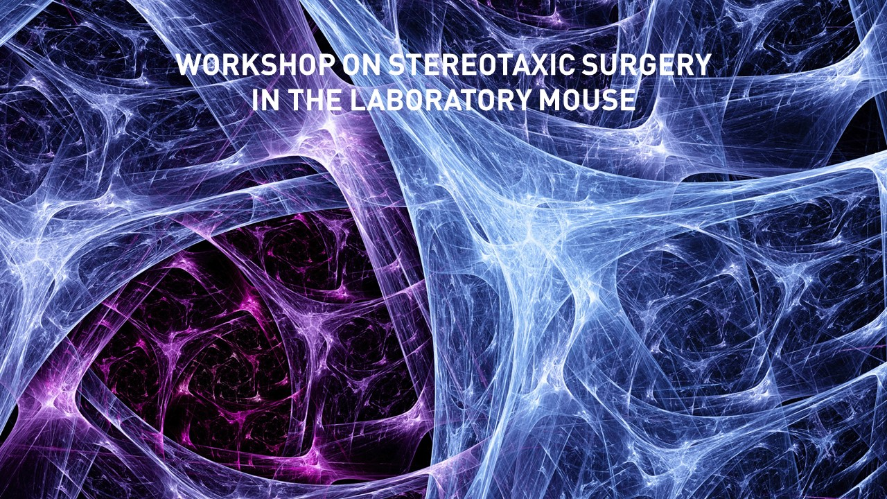 workshop-on-stereotaxic-surgery-in-the-laboratory-mouse .jpg?w=330&hash=E709AA708F74A1AEE10F396053FC65D2C7E88B5A\\