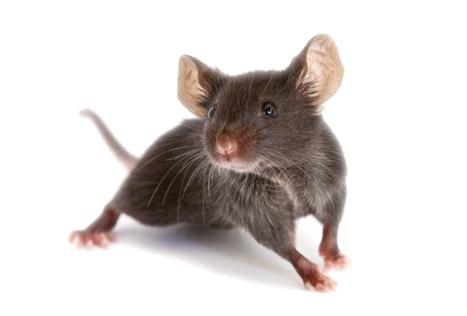 Résultats de recherche d'images pour «photo souris»