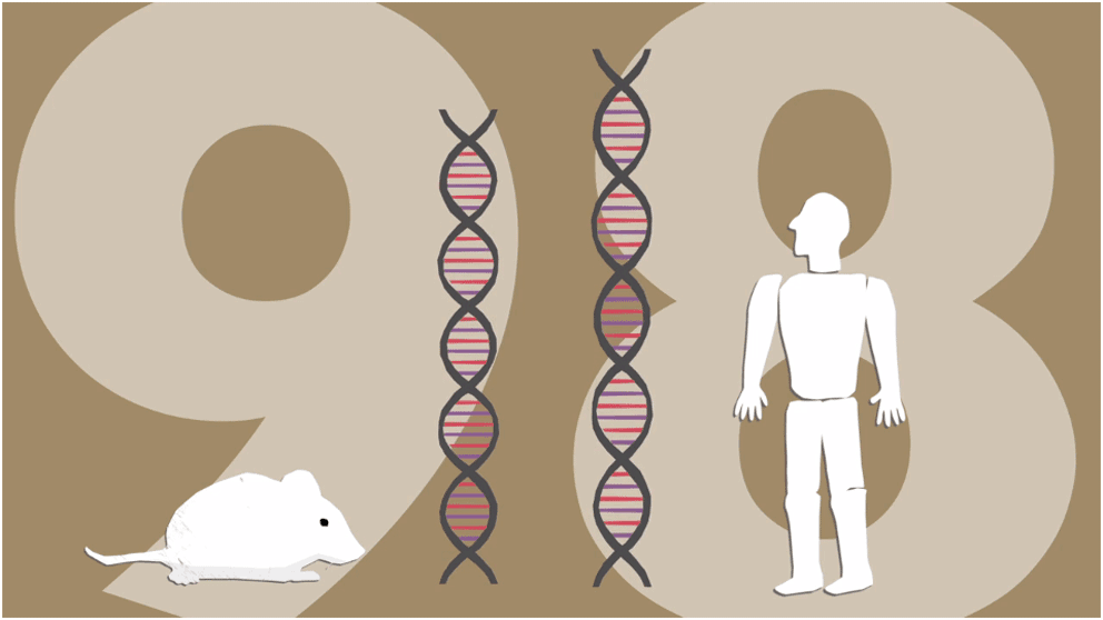 Mouse and Human share 98% of same genes