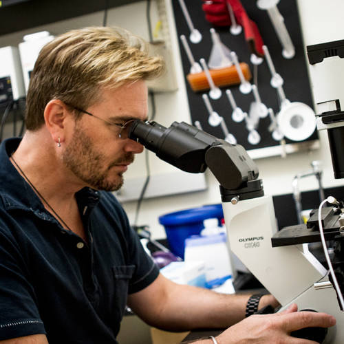 What are some possible careers for someone who is interested in cells and is good with microscopes?